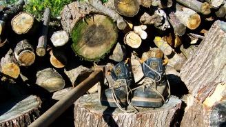 Задържани са 23 кубика нелегално отсечена дървесина за последните два дни