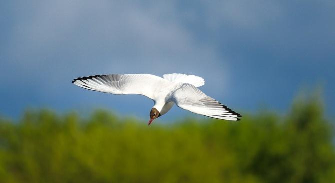 Рядък вид албатроси е застрашен от изчезване заради едри мишки,