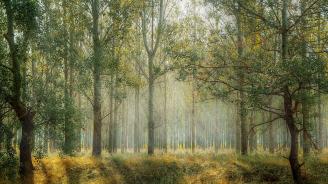 80 декара нова гора ще бъде залесена в Шуменско