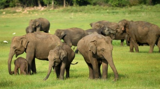 Ток уби седем диви слона в Индия
