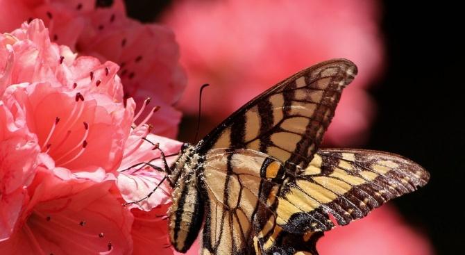 Пеперудите, пчелите и мравките в Германия намаляват