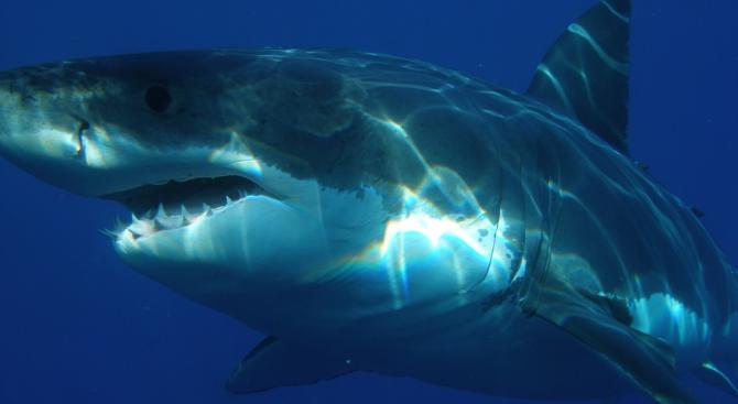 Сърфист се сби с акула