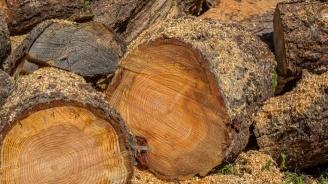 Хванаха бракониери с 22 кубика дърва