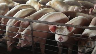 Голям пожар изпепели 1700 прасета в Германия