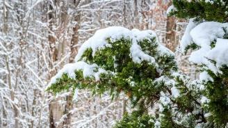 Студ и сняг в по-голямата част от страната