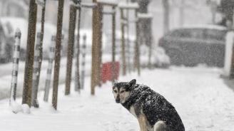 Жълт код за сняг и дъжд в цяла България утре