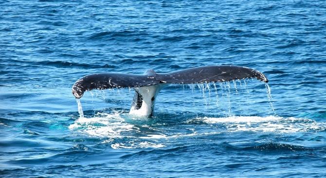 Мъртъв кит изплува на брега в Източна Индонезия, а в