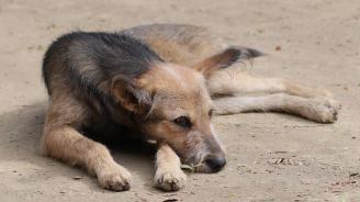 Полицията в Пазарджик: Няма разхвърляна отрова за кучета по детските площадки в града
