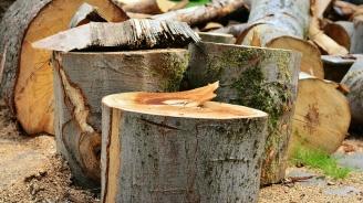 30 куб. м незаконна дървесина заловиха за два дни във Видин и Габрово