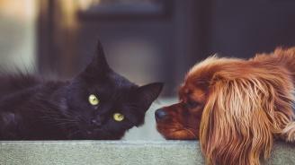 Учени опровергаха твърдениeто, че кучетата са по-умни от котките