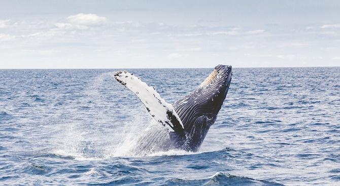 Около 150 кита бяха намерени мъртви на плаж в Нова Зеландия