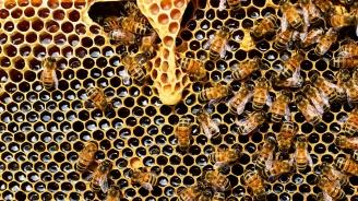 Спад на добива на мед за 2018 г.