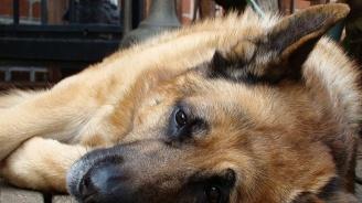 Съдят мъж, убил бездомно куче