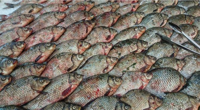 """В кърджалийския храм """"Св.Йоан Предтеча"""" раздадоха 100 кг риба"""