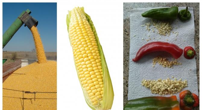 ГМО не са вредни, стига истерии