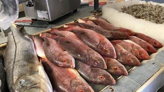 Свръхуловът и климатичните промени заплашват запасите от риба на Земята