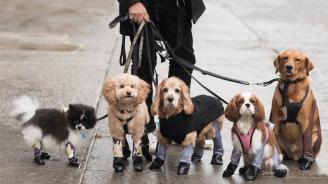 Домашните кучета вече ще могат да се разхождат с чорапогащи
