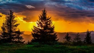 30% от диворастящите растения в Германия са застрашени от изчезване