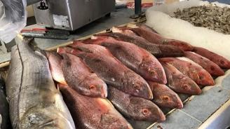 Над 440 проверки извърши агенцията по рибарство за последната седмица, повече от 7 т. риба е иззета през годината