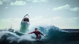Сърфист бе нападнат от акула край бреговете на Австралия
