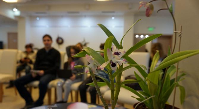 Проведе се търг на колекционерски орхидеи (снимки)