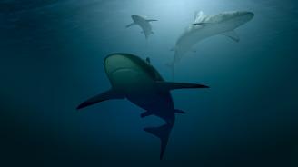 Заради глобалното затопляне акулите започват да предпочитат дясната посока