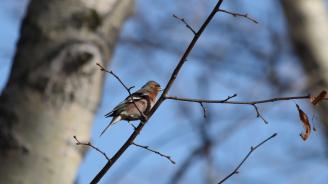 Пияни птички напълниха парковете на Москва