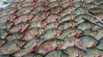 БАБХ извърши над 1000 извънредни проверки на обекти за производство и продажба на риба