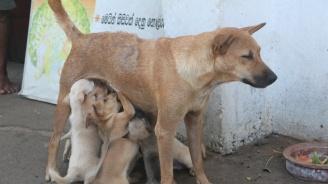 Бум на кучешка тения в Кърджали