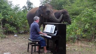 Изпълнения на пиано успокояват слонове в тайландски резерват (видео)