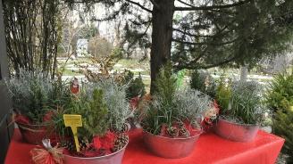 Тридневен коледен базар стартира в Ботаническата градина в София (снимки)