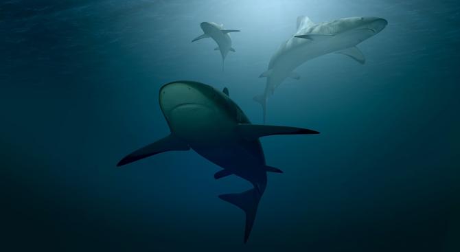 Заради климатичните промени и глобалното затопляне акулите започват да предпочитат