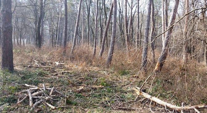 Дърво падна и рани тежко млад мъж