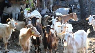 Животновъдите получиха още близо 112 млн. лева за кампания 2018 г.