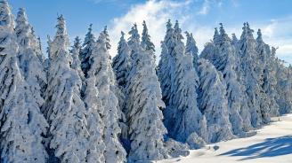 Сняг заваля и в редица европейски страни