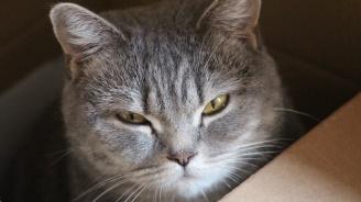 Домакиня изпрати без да иска котката си в колет