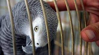 Известен турски готвач арестуван в Истанбул, измъчвал папагала си (видео)