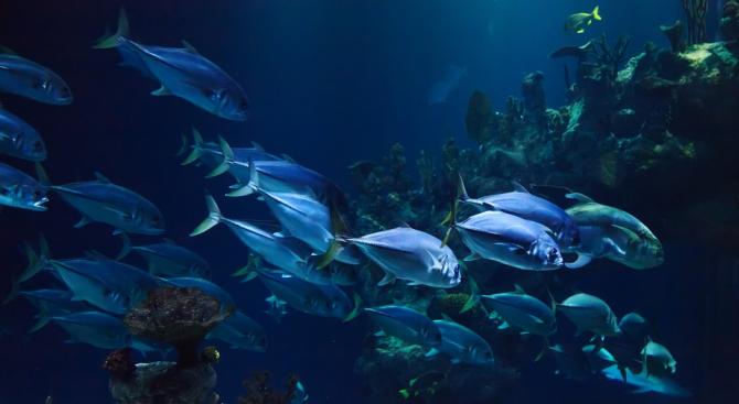 Водолази видяха край Калифорния екзотична раирана риба, която явно е
