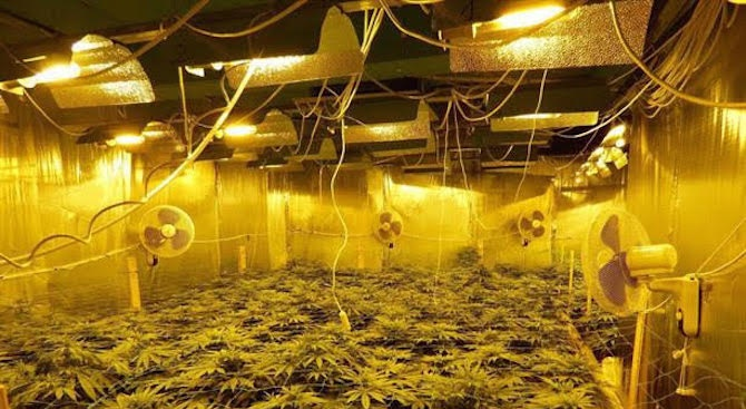 Специализирана полицейска операция срещу производството и разпространението на наркотични вещества