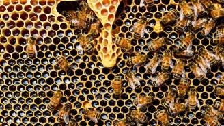 Пчеларите кандидатстват от 7 януари за финансиране