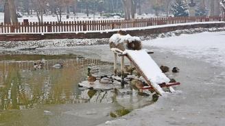 По загадъчен начин са загинали патиците в Борисовата градина (снимки 18+)