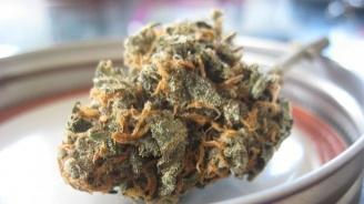 Тайландският парламент одобри използването на марихуана за медицински цели