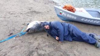 Гигантски сом уловиха рибари в река Дунав (видео)