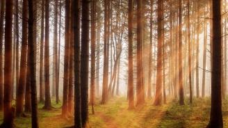 """Експерти препоръчват да се вслушваме в """"гласа"""" на горите, ако искаме да спрем обезлесяването"""
