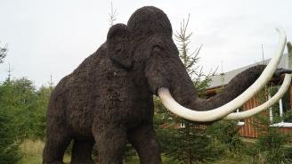 Британски учени откриха ДНК на мамут в изделия от слонова кост