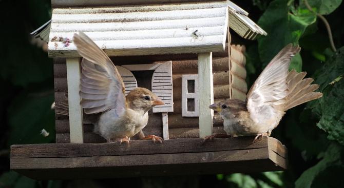 Зоолози от университета в Гронинген, Холандия, установиха, че междувидовата борба