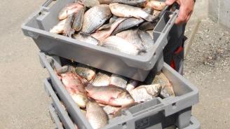 ИАРА дари над тон риба на Социалния патронаж в Бургас