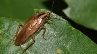 Зоологическа градина предлага да кръстите хлебарка на бившия си