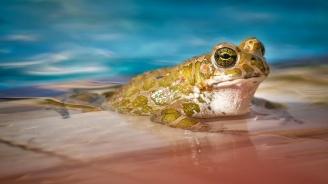 Най-самотният жабок на света най-после си намери партньорка (видео)