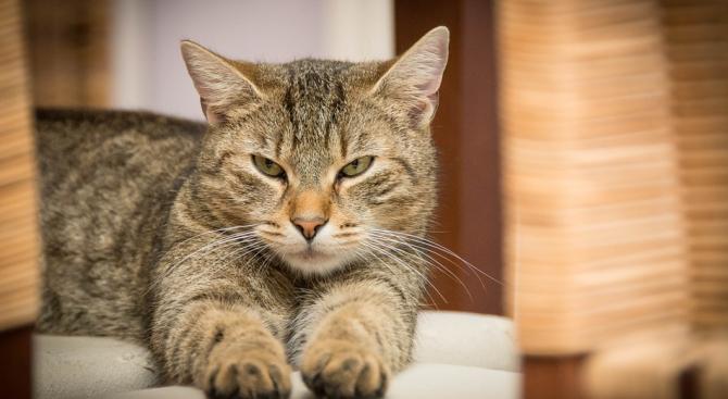 Снимка: Американец нае апартамент за котките на дъщеря си